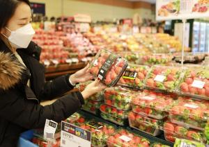 롯데마트, 제철 맞은 고당도 '딸기' 판매 개시