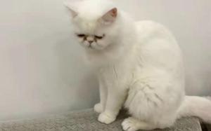 워싱턴DC에 고양이 20만마리 서식… 절반 집고양이